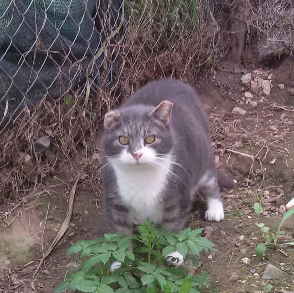gatti in cerca di casa